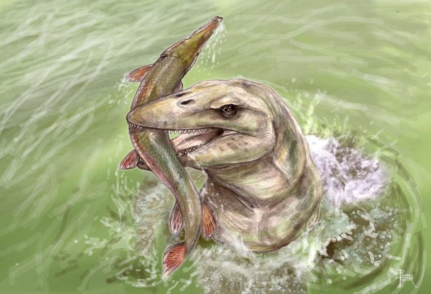 Pannoniasaurus inexpectatus egy Atractosteus kajmánhalat zsákmányol (grafika: Pecsics Tibor).
