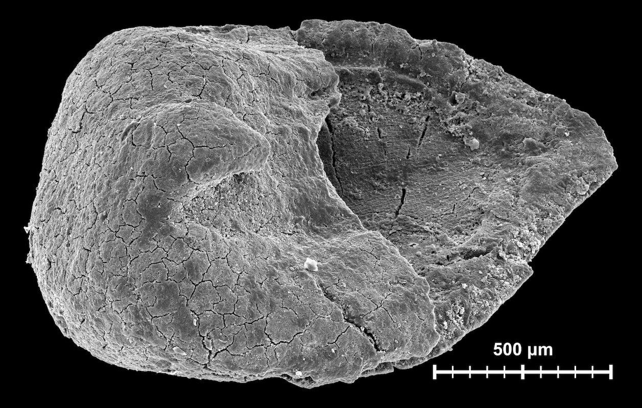 Növényi mezofosszília vizsgálatok