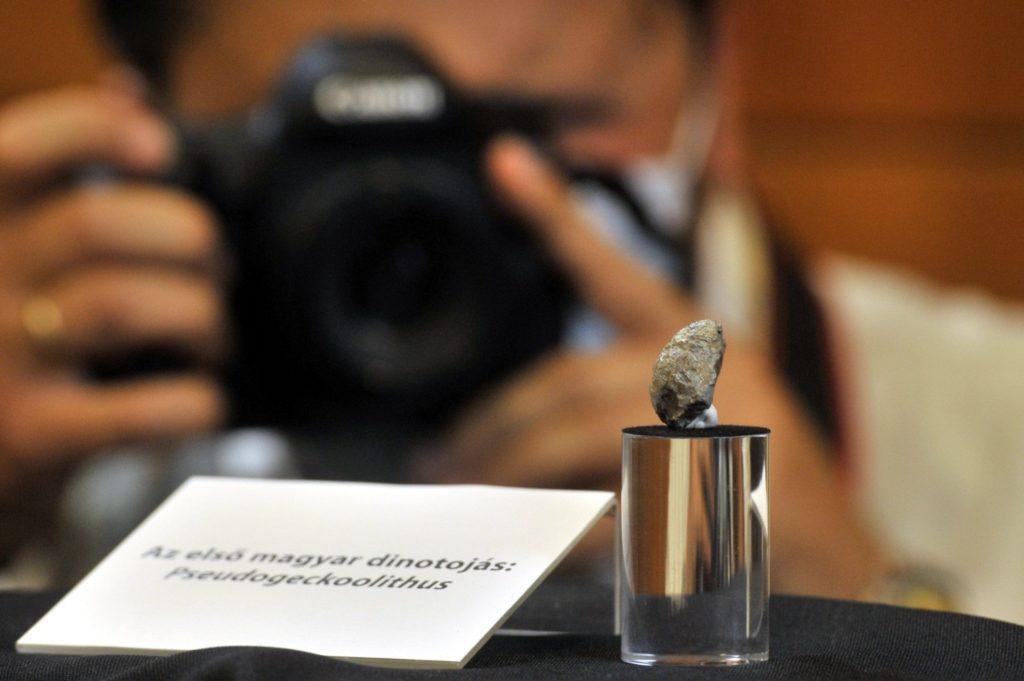 Az első mai Magyarországon felfedezett dinoszaurusztojás 2020. szeptember 24-én, a Magyar Természettudományi Múzeumban rendezett sajtótájékoztatón [fotó: MTI/Kovács Attila]