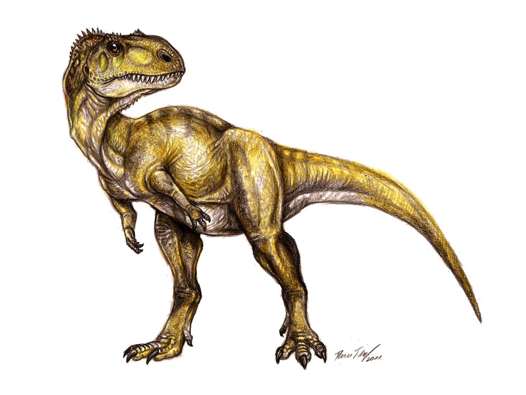 Figure 2. Reconstruction of Abelisaurid