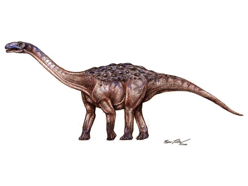 Basal Titanosauria Sauropod dinosaur.