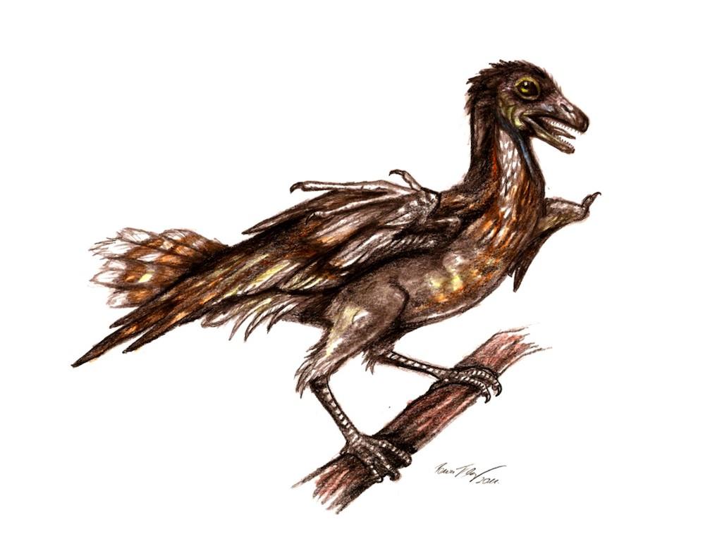 Bauxitornis mindszentyae testrekonstrukciója