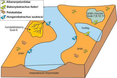 2.ábra: Az iharkúti folyóvidék sematikus rekonstrukciója a különböző kétéltűek élőhelyeivel.