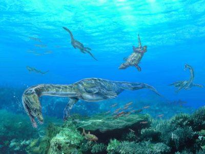 Középső-triász villányi életkép, sekélytengeri vízi hüllőkkel, Nothosaurusokkal és Placodontiákkal (Pecsics Tibor illusztrációja)
