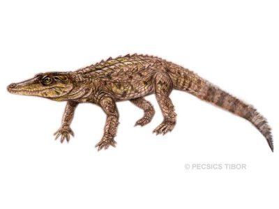 Theriosuchus