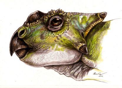 Head reconstruction of Ajkaceratops