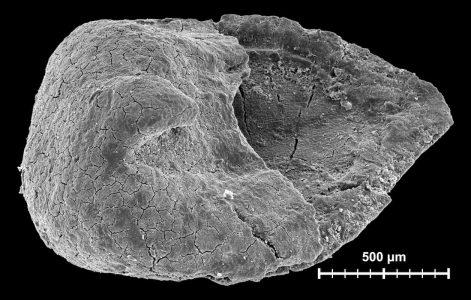 Plant mesofossil studies
