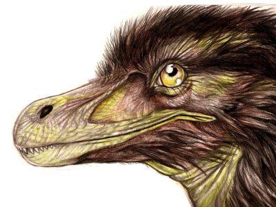 Pneumatoraptor fodori fejrekonstrukciója